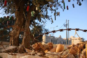Bethlehem Museum Lights Christmas Olive Tree